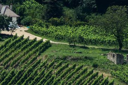 UN bel posto in mezzo alle vigne ed ai cinghiali - Candida