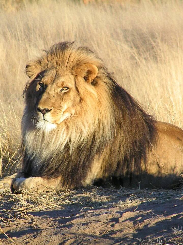 Larger Wildlife