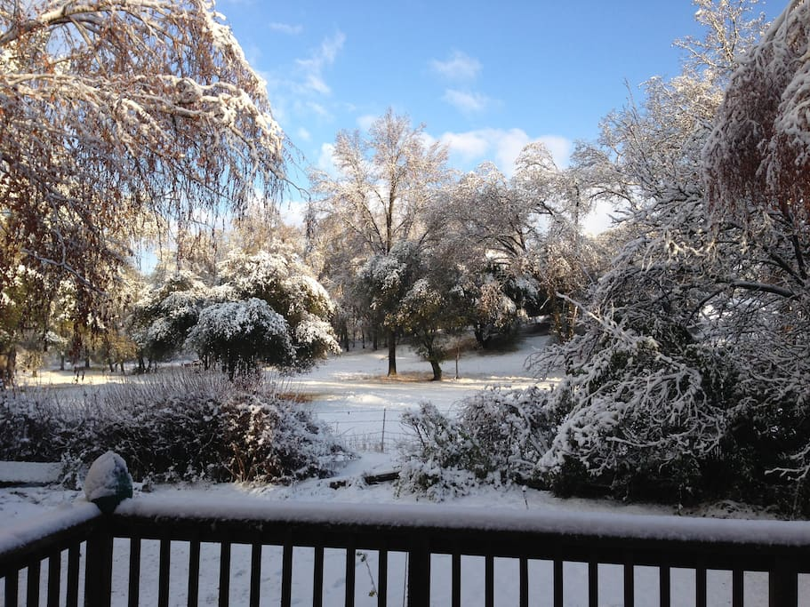 Here is the back yard view after the rare snowfall.
