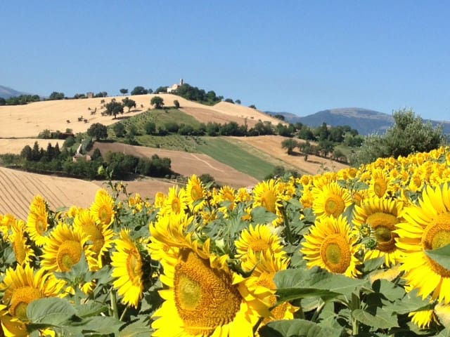 Located in beautiful Le Marche countryside