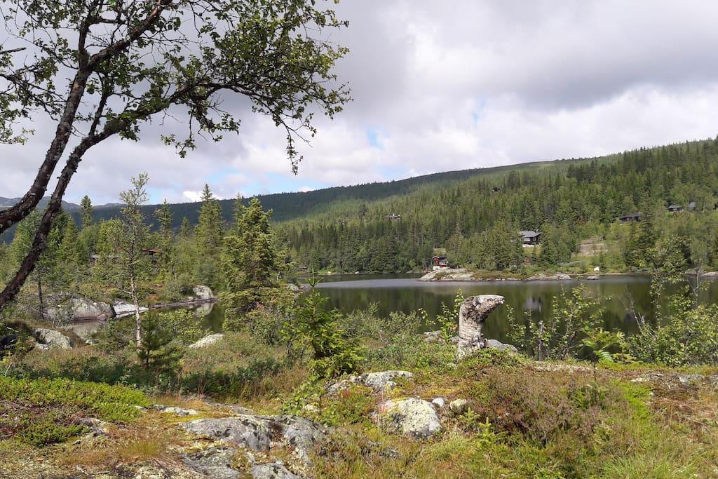 Utsikt fra hytta.