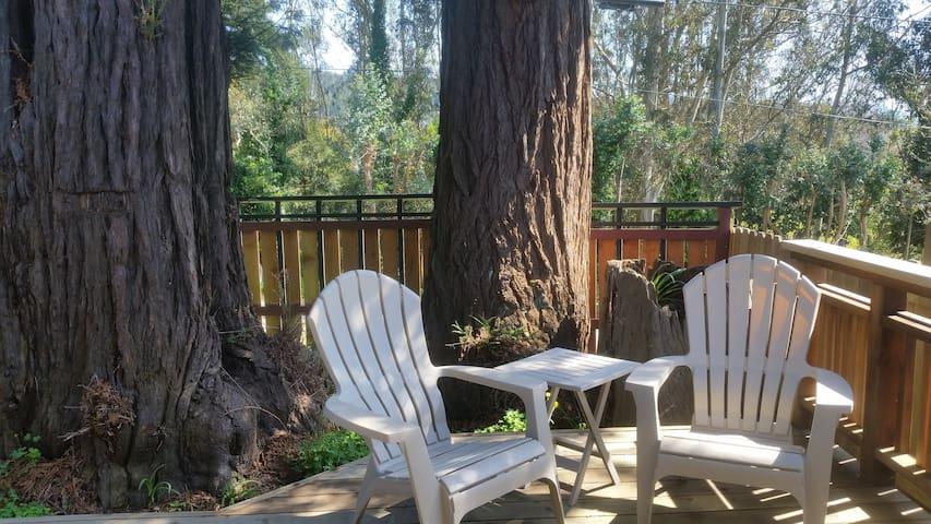 Three Trees Hollow - Charming, Classy Studio in Downtown Arcata