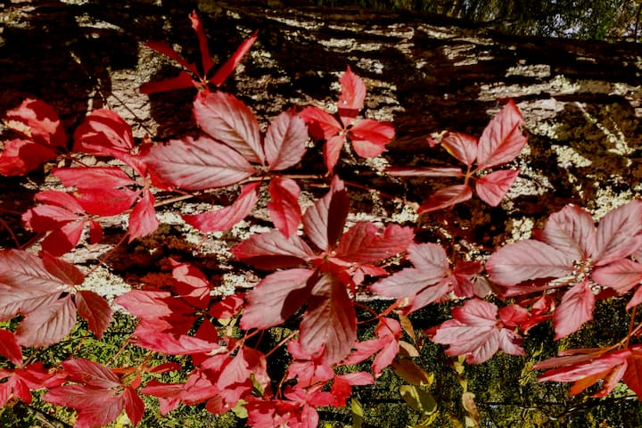 Enjoy a last minute stay Upstate as the leaves begin to embrace the fullness of their soon to be glory!