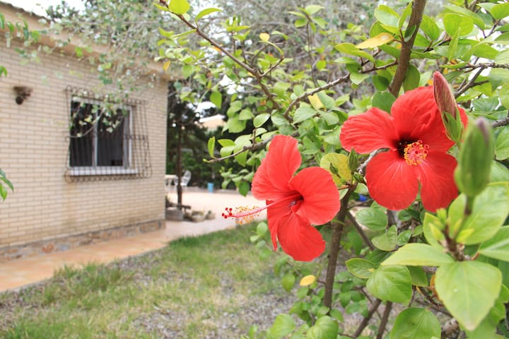 Villa with garden, 200m2, 55km from Alicante - Pueblo Latino - Villa
