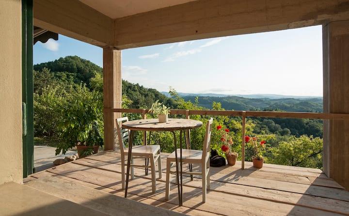 Un'estate nel bosco dei colli bolognesi