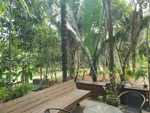 Casa da árvore amazonia