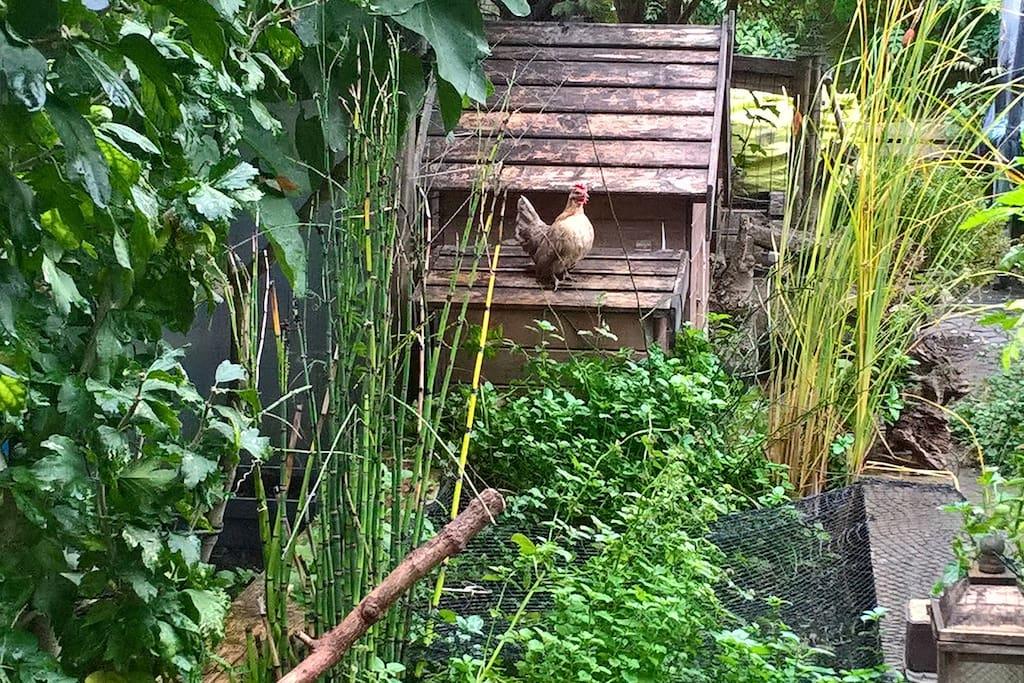 Tips in de tuin