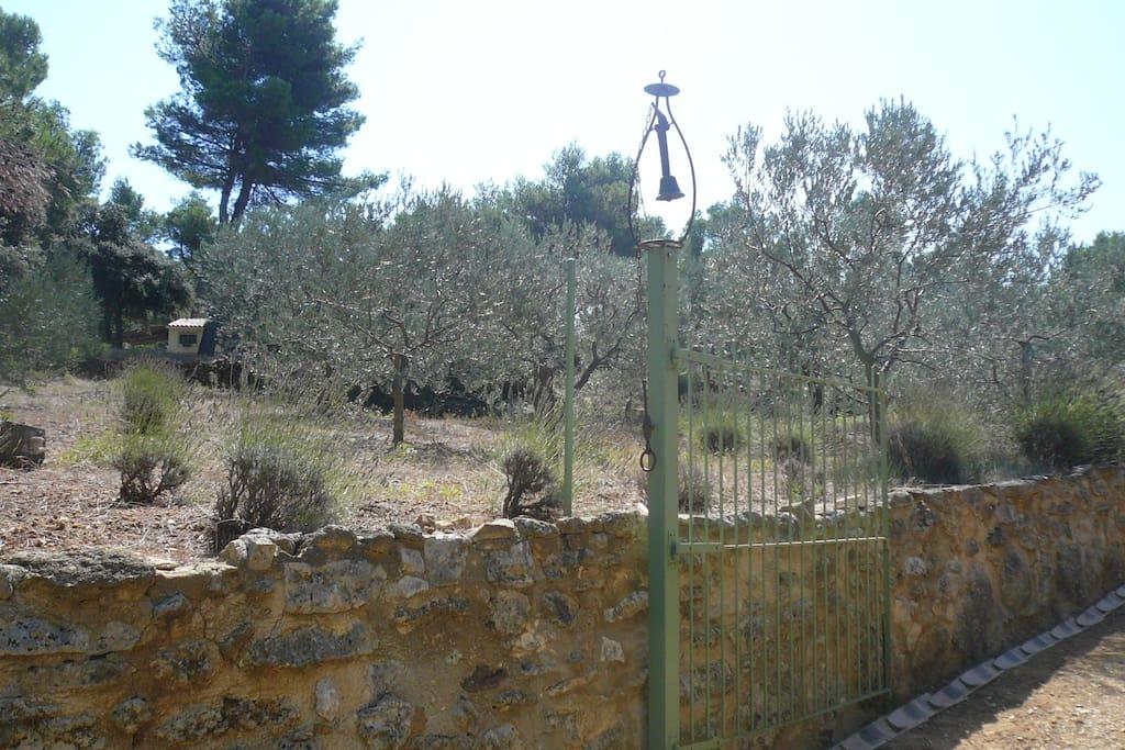 Oliveraie : vous êtes en Provence !