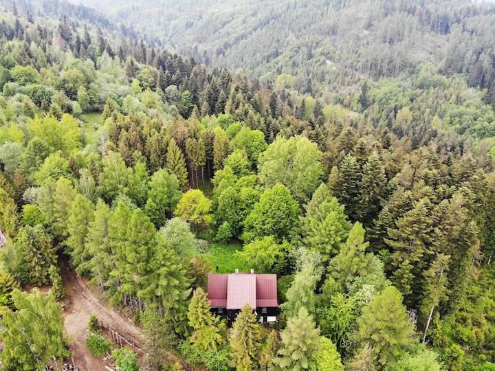 HabdaSówka — drewniana chata w środku lasu