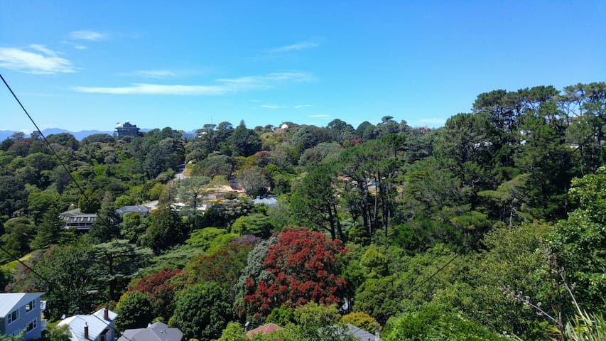 View of Botanic Gardens, planetarium and treehouse visitor building across the road. December view of the in-bloom Pōhutukawa trees