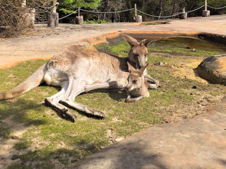 Wild Night @ Walkabout Wildlife Retreat