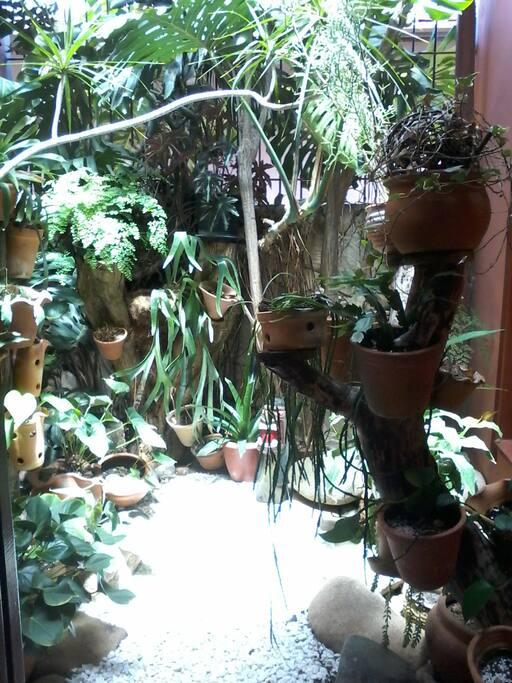 Jardim interno. Área compartilhada