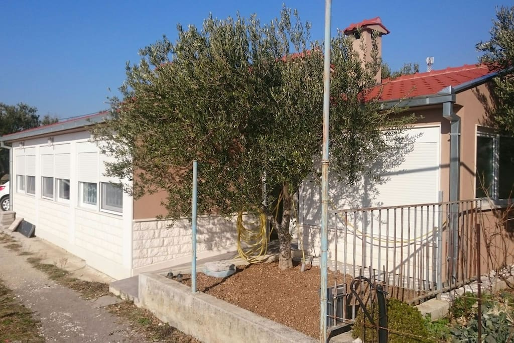 Little garden and olive tree