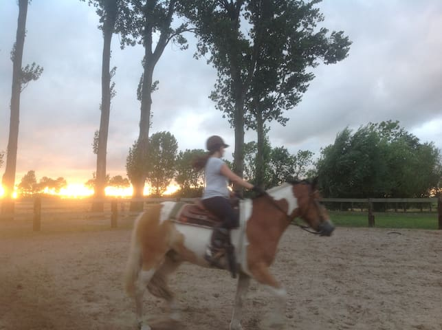 Paard rijden op de boerderij in de bak