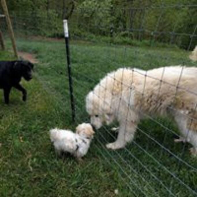 Murphy meets hiker dog