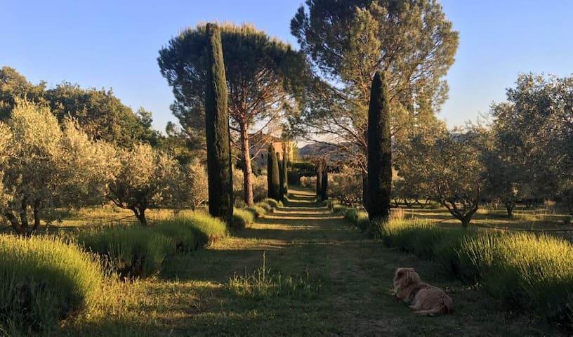 Beautiful Villa in Provence