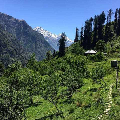 Apple Orchard in the Parvati Valley