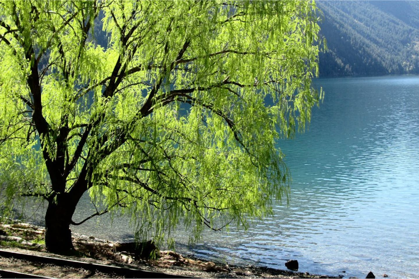 """""""By the Willow Tree"""" - One of two beaches at Anderson Lake."""