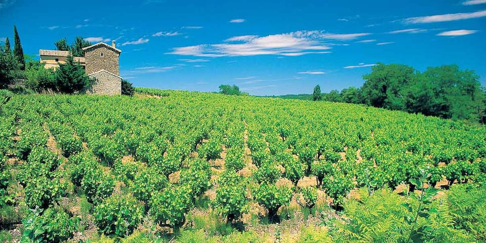 Private villa in the heart of the Languedoc