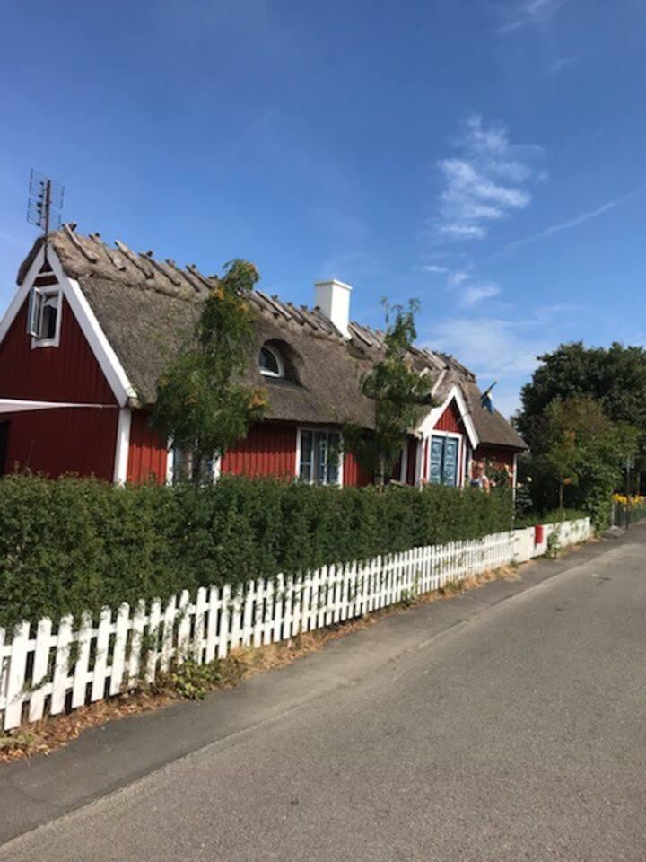 1800-tals hus med halmtak mitt i Kivik