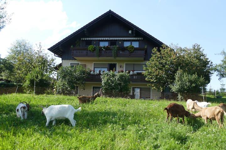 Ferien-/ Monteurwohnung auf dem Bio-Bauernhof