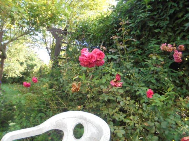 Gemütliches Zimmer mit Gartenblick