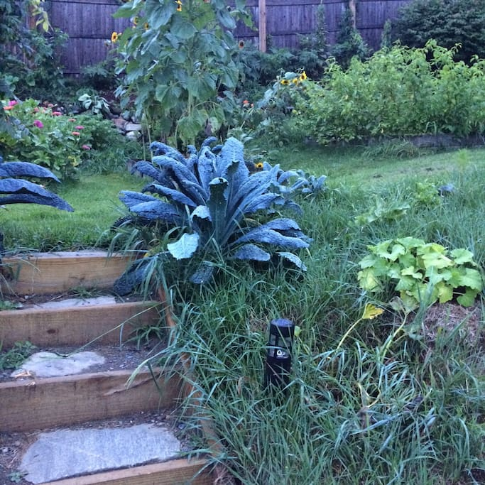 top of steps looking onto the upper garden -  August 2016