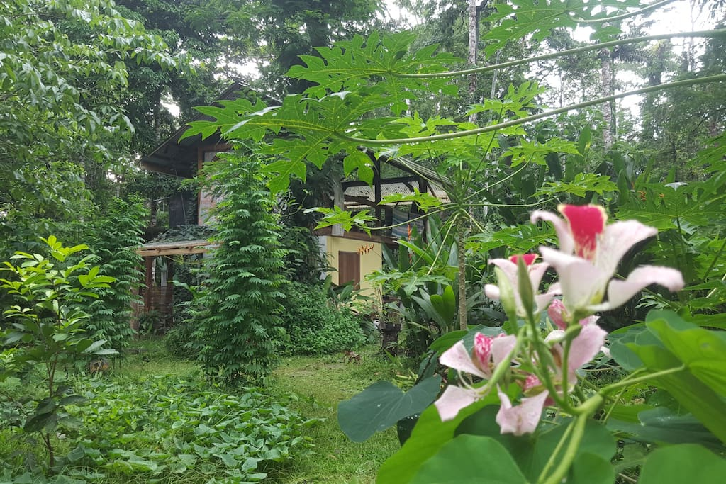 food garden with kitchen in the background