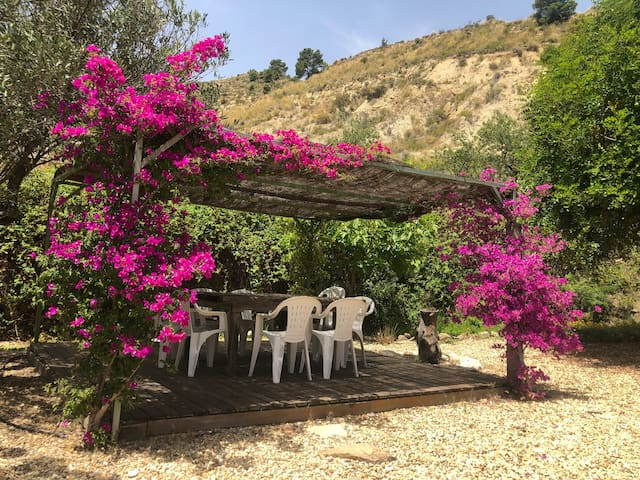 We have lots of different areas to relax out of the sun too, here is our covered table w/Bougainvillea growing up the edges