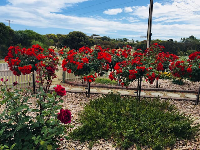Red standard roses leading up to the front entrance give a glorious entrance at certain times of the year .