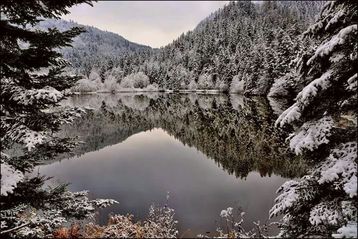 Très calme, ski, randonnnée. - Lautenbach - Casa
