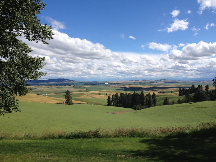 Springtime on the Palouse--view from our deck