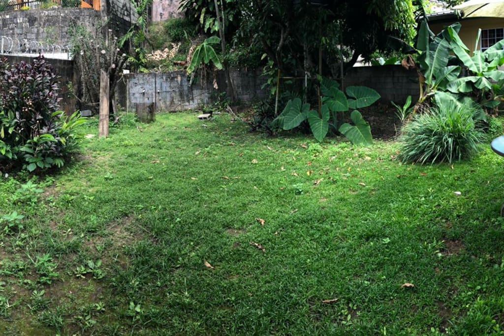 An open lush backyard with fruits