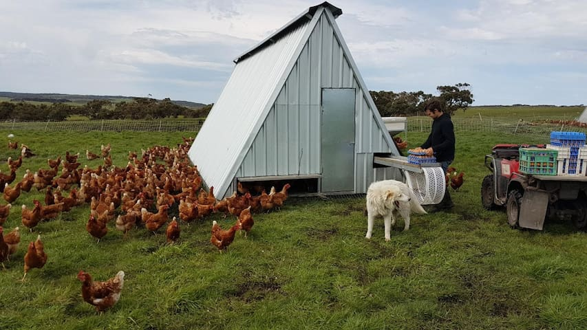Ruby Hills Organics Chook Shed