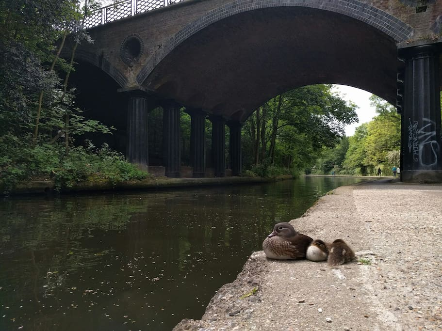 Enjoy a morning stroll across the Regents Canal
