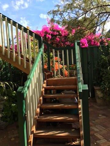 Stunning bougainvillea
