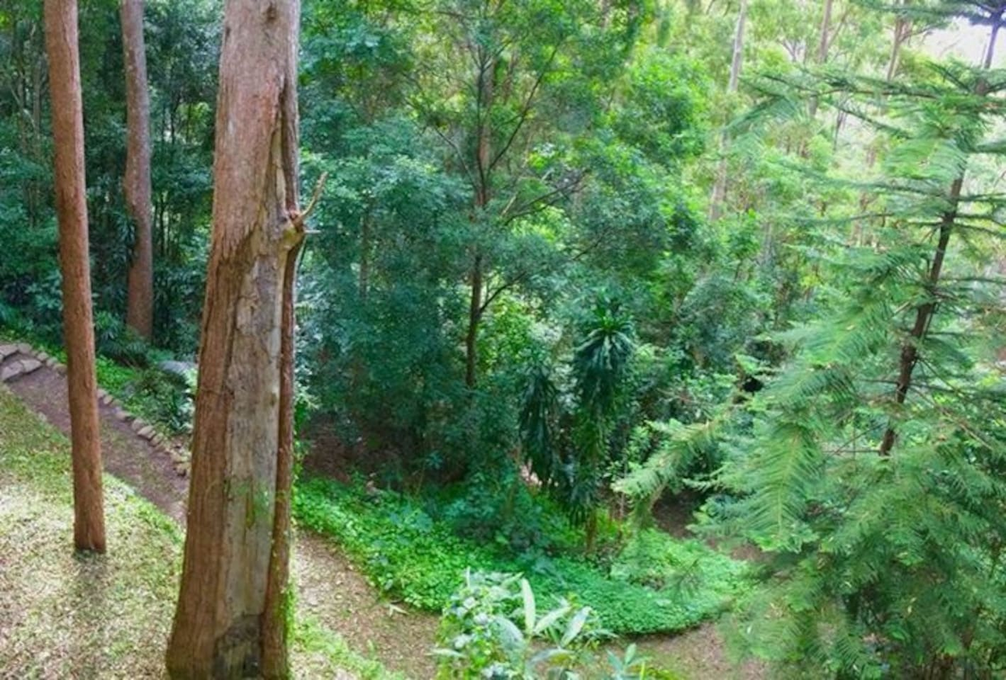 Forest views and private walking trails on the property.