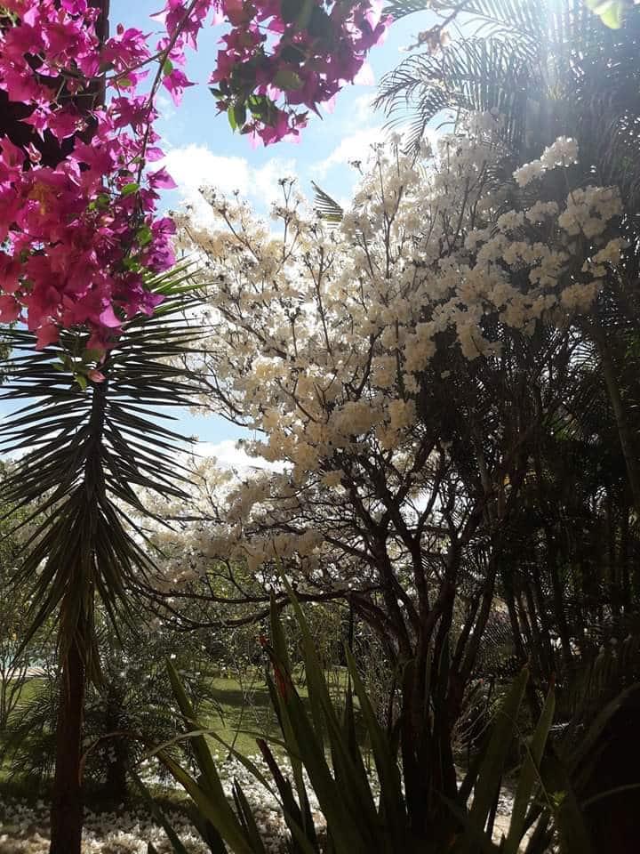 Pousada Vila Verde ,  lazer, aconchego e natureza