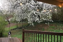 View from the back porch during spring.