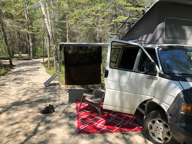 Little Van Spot in the Forest - a Skip from Gimli