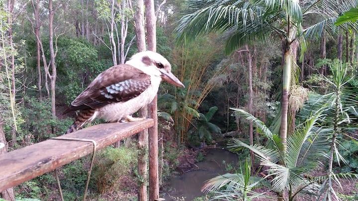 Natures Retreat Sunshine Coast