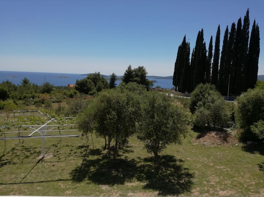 The view from the terrace and parking places by the olive trees
