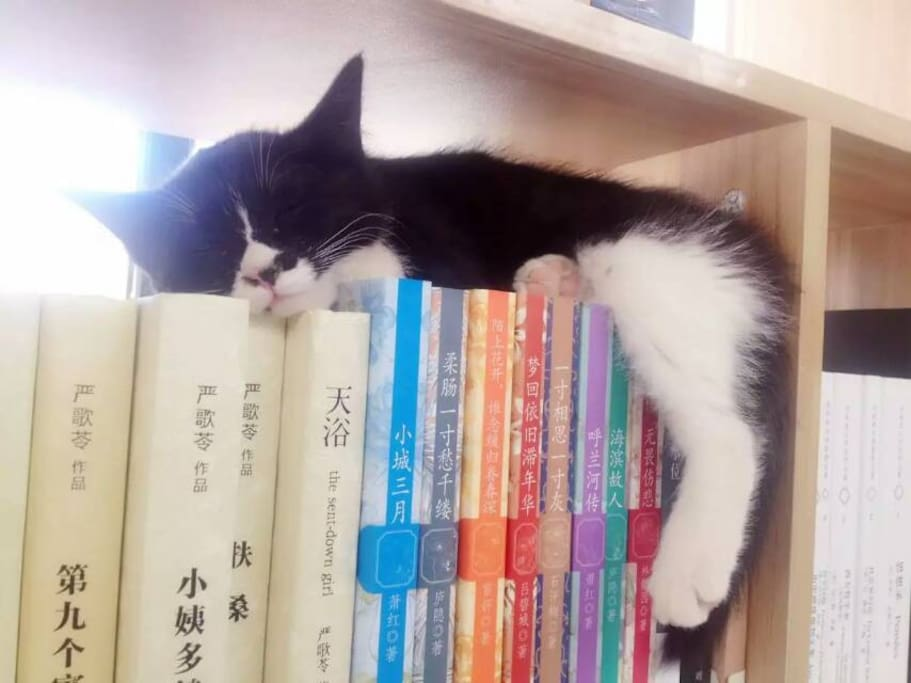 客栈内有4只可爱又懒惰的猫咪和一只活泼的狗狗,它们经常会趴在书架上呼呼大睡,而客栈提供书籍给旅行者阅读。