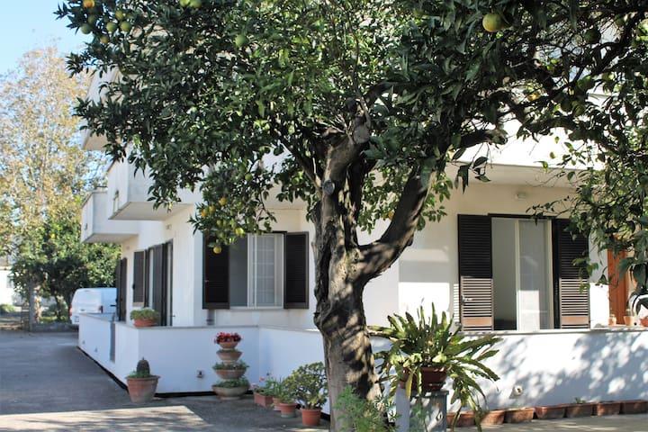 Casa Marina - Minturno - Apartamento