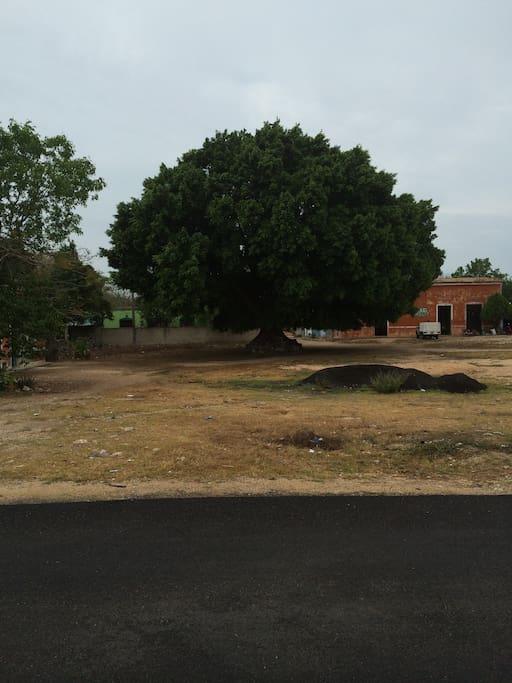 Town Tree