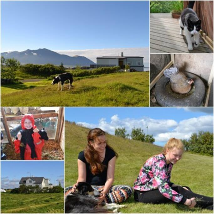 If you like a personal approach and a warm smile and a  handshake on arrival then you  have found  us. and we welcome you all to our family farm with horses sheep lambs calves and chickens and ofcours dogs and our cat. A 5 min walk from your own privet beach. and only a 10 min drive by car to the village of Borgarnes (23 min by bike)