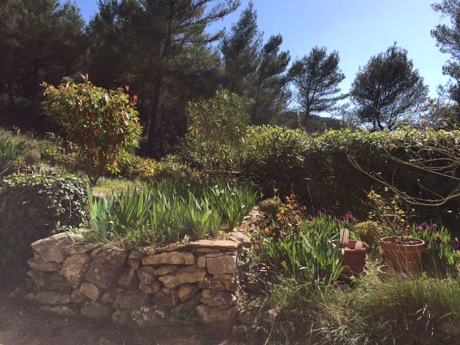 Vue donnant sur le jardin fleuri au printemps
