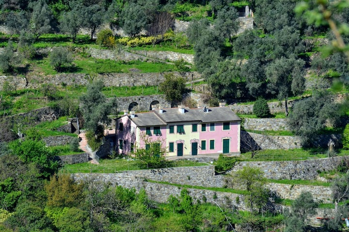 Villa Olivari - apt. la Salvia
