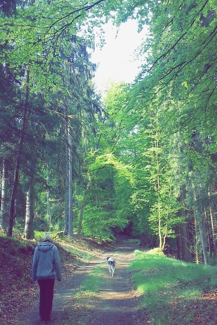 Des randonnées magnifique au coeur de lanature