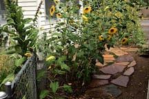 Summer sunflower jungle, side house